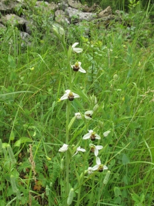 orchidee IMG_2613 (14)