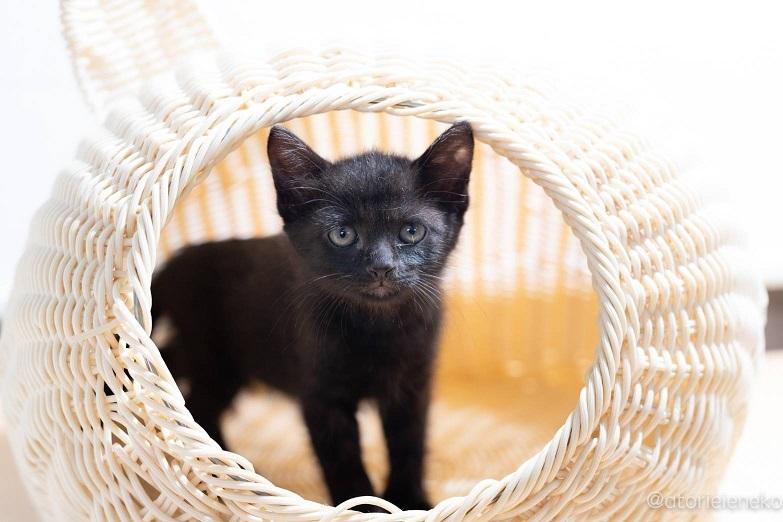 4匹こねこ黒猫