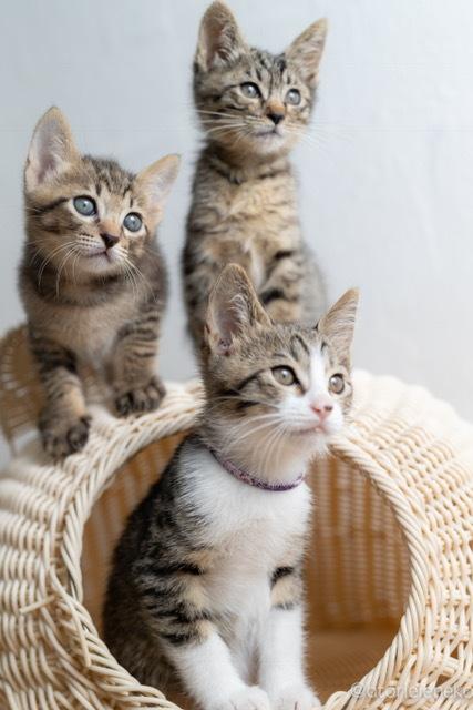子猫祭り2