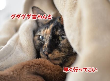 DSC_8987.jpg