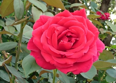 近所の花04