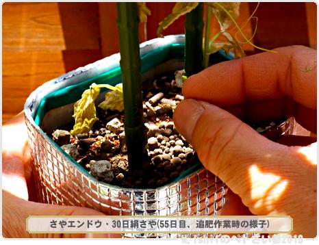ペトさい(30日絹さや)69