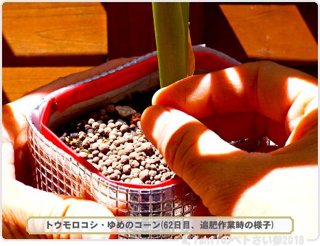 ペトさい(トウモロコシ・改)34
