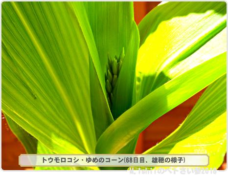 ペトさい(トウモロコシ・改)44
