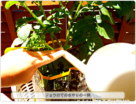 ペトさい(ジャガイモ・改)35