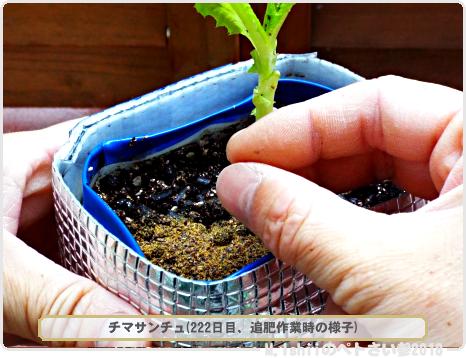 ペトさい(チマサンチュ・改)67
