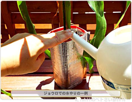 ペトさい(トウモロコシ・改)64