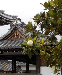 東本願寺5-30