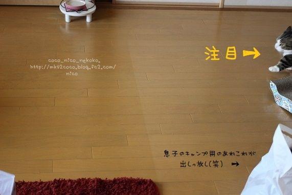 IMG_7996(1).jpg