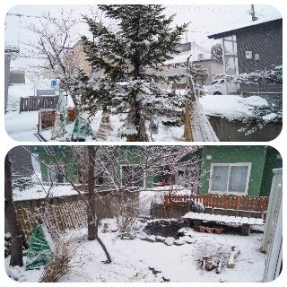 白くなった庭