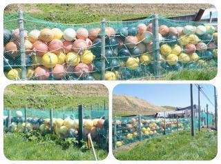浮き球塀2