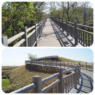 知床国立公園2