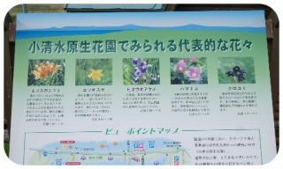 小清水原生花園6