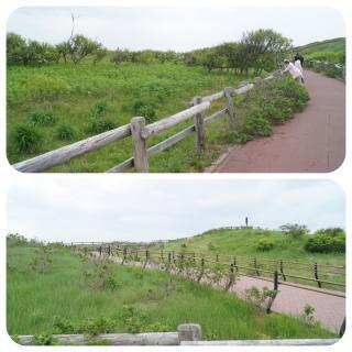 小清水原生花園7