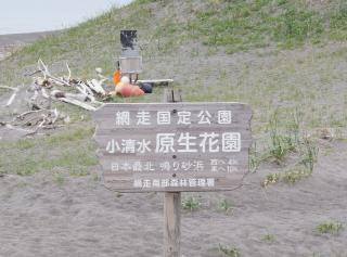小清水原生花園9