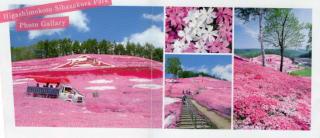 芝桜公園2