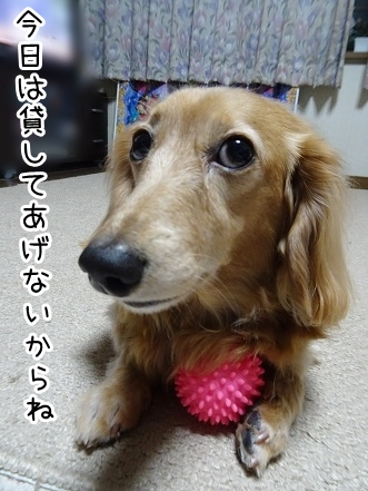 kinako9308.jpg