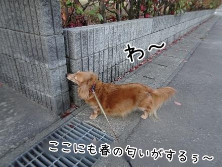 kinako9315.jpg