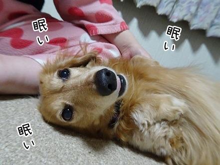 kinako9316.jpg