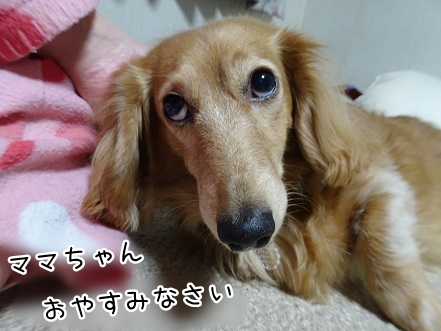kinako9318.jpg