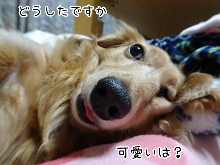 kinako9324.jpg