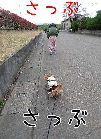 kinako9326.jpg
