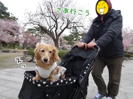 kinako9327.jpg
