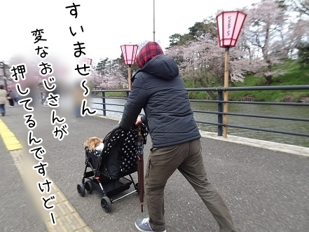 kinako9328.jpg