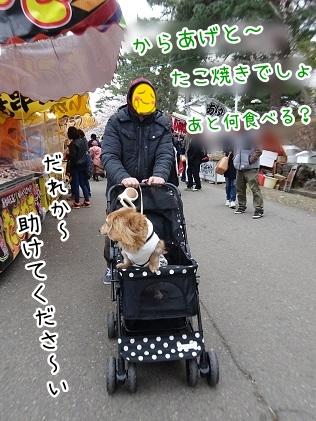 kinako9329.jpg
