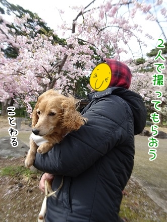 kinako9330.jpg