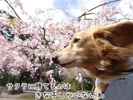 kinako9334.jpg