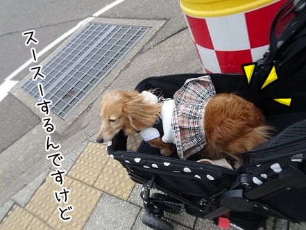 kinako9336.jpg