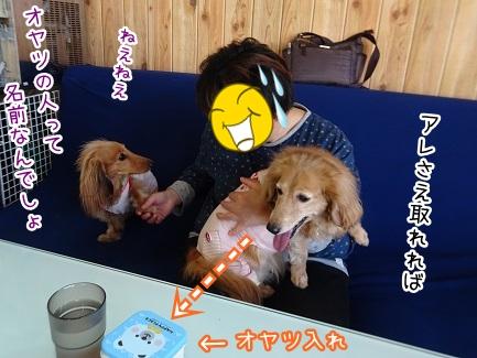 kinako9339.jpg