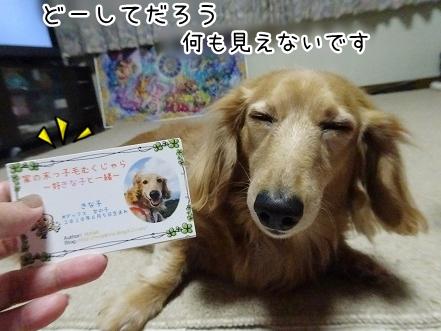 kinako9344.jpg