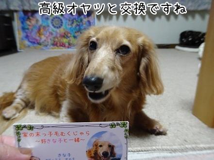kinako9347.jpg