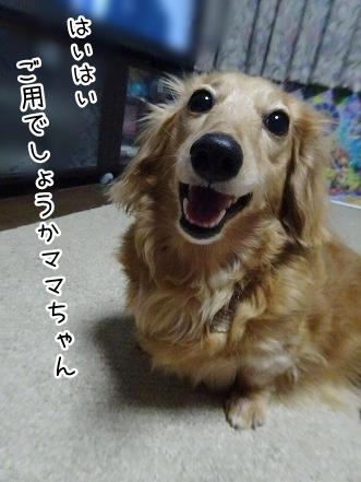 kinako9349.jpg