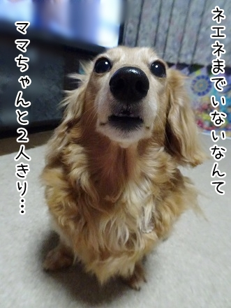 kinako9351.jpg