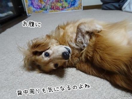 kinako9355.jpg
