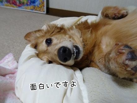 kinako9359.jpg