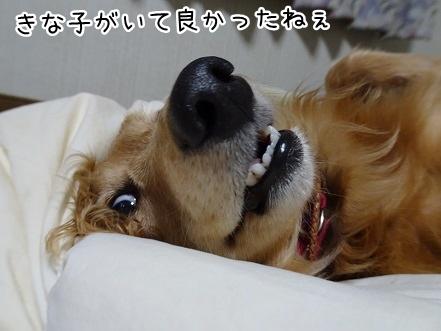 kinako9361.jpg