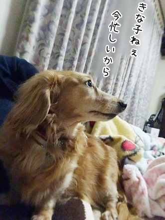 kinako9363.jpg