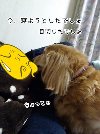 kinako9364.jpg