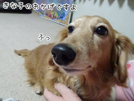 kinako9365.jpg