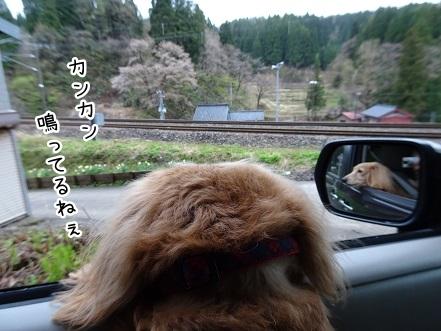 kinako9368.jpg