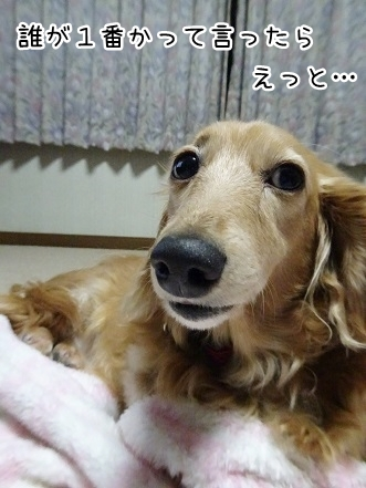 kinako9372.jpg