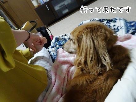 kinako9387.jpg