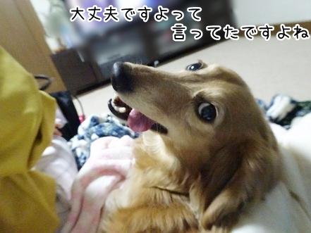 kinako9388.jpg