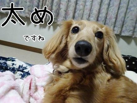 kinako9390.jpg