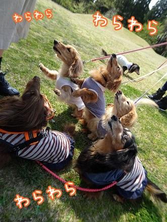 kinako9394.jpg
