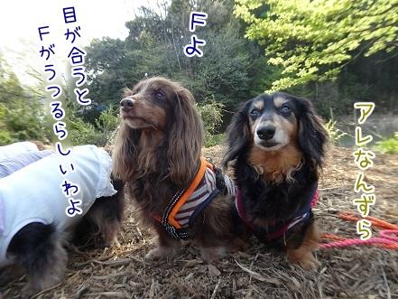 kinako9412.jpg